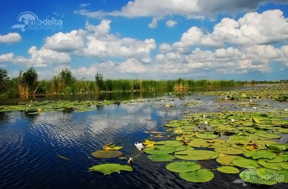 Rezervația Biosferei Purtul de Jos