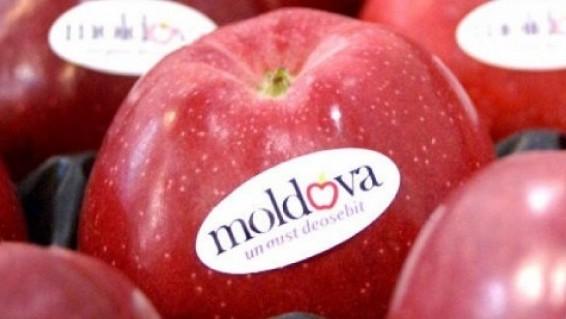 mere-Moldova-586x319
