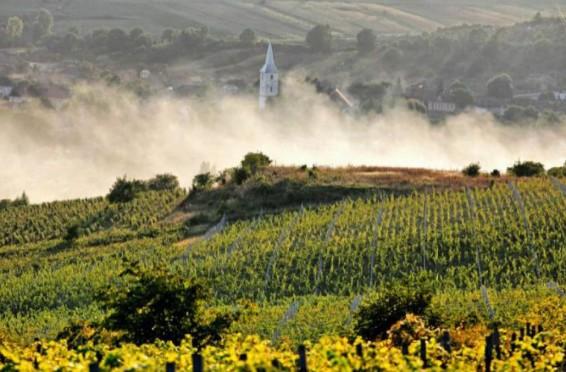 turismul-viticol--sustinut-de-autoritatile-de-pe-ambele-maluri-ale-prutului--cand-va-fi-creata-ruta-vinului-Stefan-cel-mare-si-sfant-45310