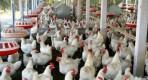 news-category-in-acest-an-moldova-ar-putea-exporta-carne-in-ue